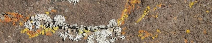cropped-lichen-2.jpg